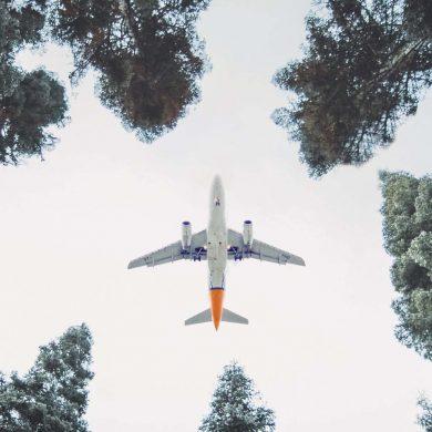 Plane Seen Flying Through Trees